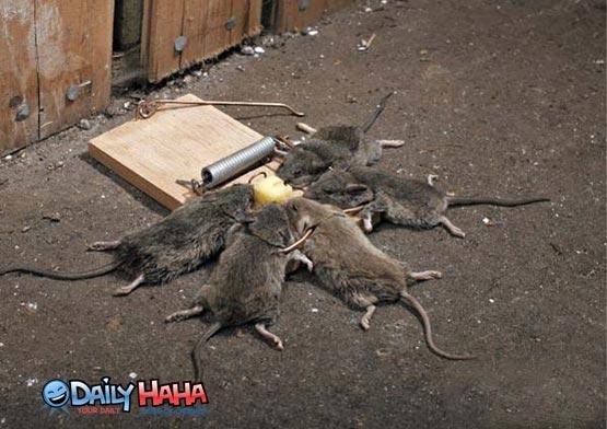 effective_mouse_trap