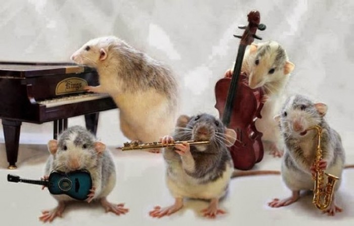other-orchestra-mouses-funny-animals-orkestar-full-hd-animal-wallpapers-736x471